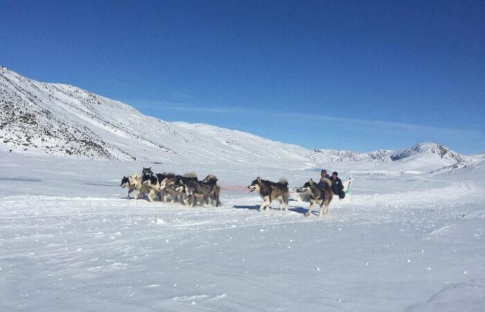 Grønland ACT Hundeslæde